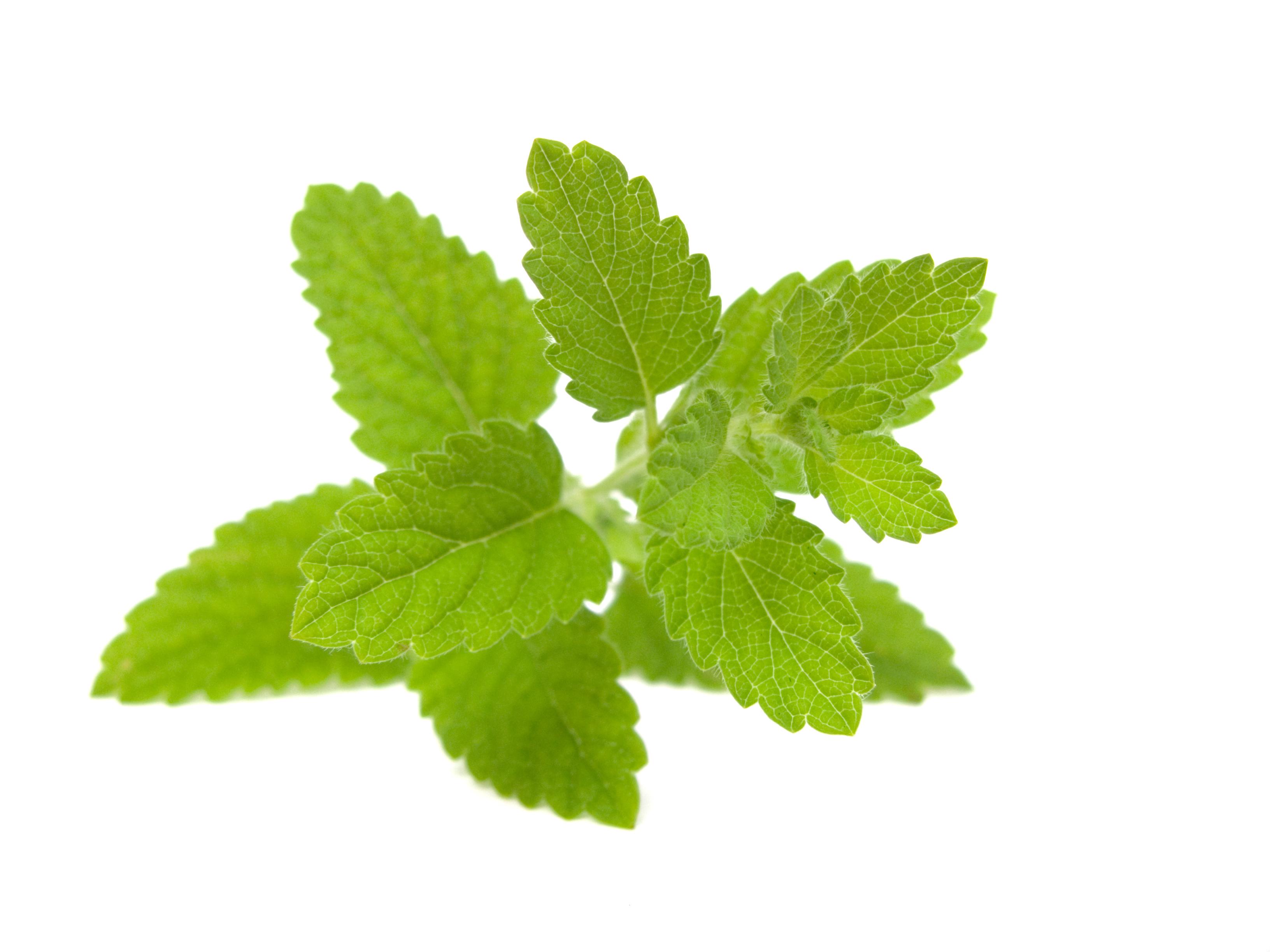 Activ'Inside : Nouvel extrait végétal bio bénéficiant d'allégations EFSA
