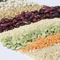 Les protéines végétales : les valoriser auprès des consommateurs