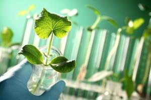 Plantes et tubes à essais - Fotolia