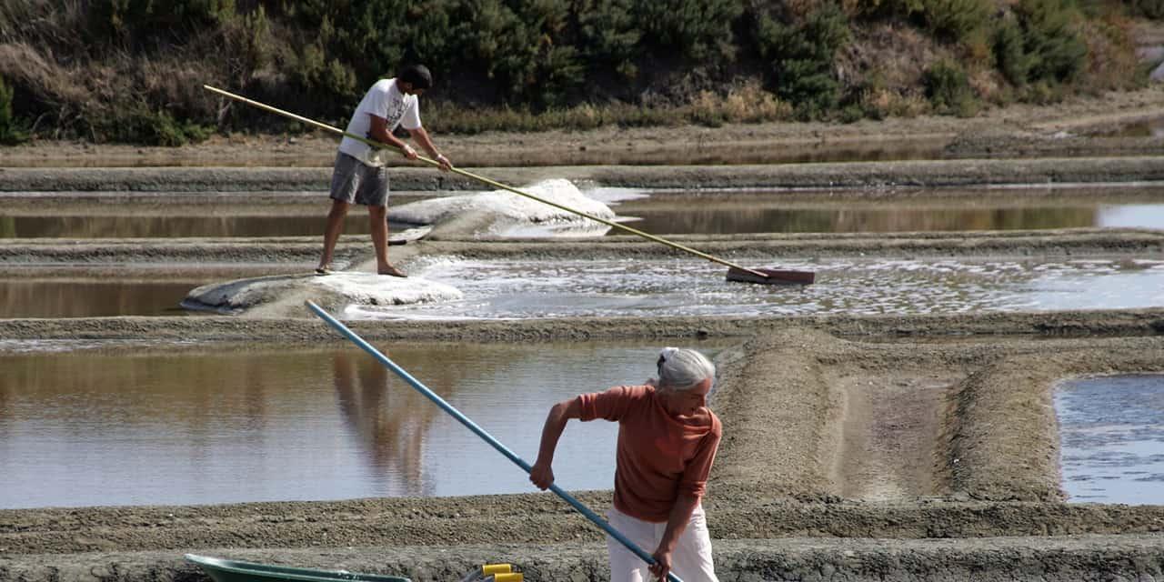 Les Salines de Guérande expose le sel Nature&Progrès au CFIA