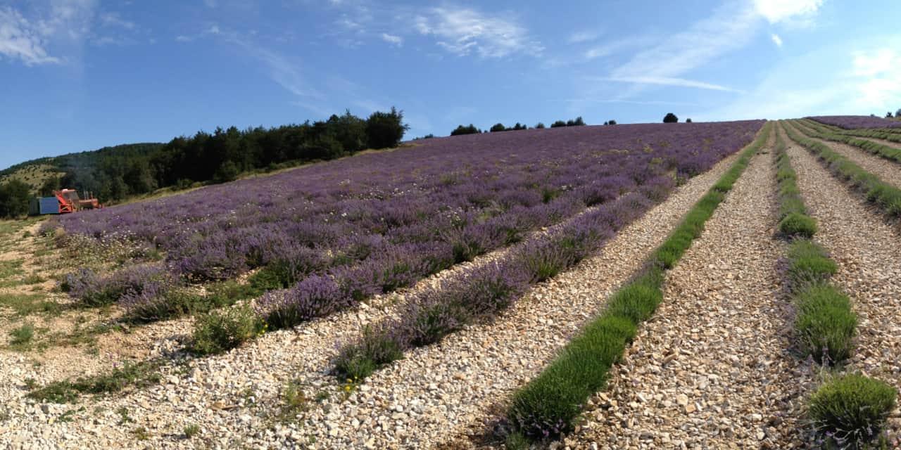 La Distillerie Bleu Provence : entre tradition et technologie innovante