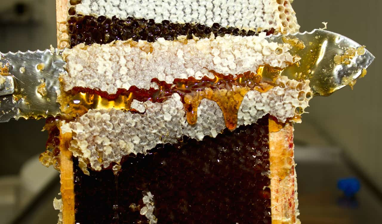 I- Situation de la production de miel bio en France
