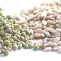 Lécithines biologiques : seront-elles obligatoires dans les produits bio?