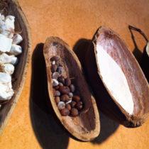 L'Afrique, une terre pleine de ressources pour des ingrédients biologiques innovants