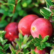 Diana Food renforce son expertise en canneberge avec l'intégration de Nutra Canada