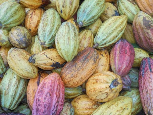 I- L'histoire du cacao : de la découverte à la production de masse