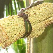Tradin Organic mise sur le sucre de coco biologique et durable