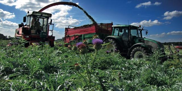 Intégrer jusqu'à la production biologique pour les extraits de plantes, une force pour EVEAR Extraction