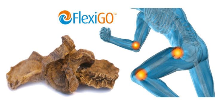 FlexiGO, l'extrait d'Harpagophytum naturel lancé au Vitafoods