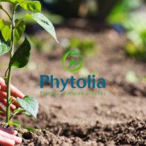 Phytolia : le nouveau label traçabilité pour garantir l'origine des plantes