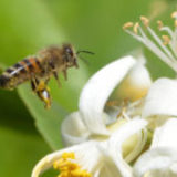 ESENCO lancera une nouvelle gamme d'extraits végétaux bio à Natexpo