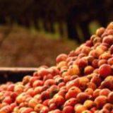 S'approvisionner en fruits biologiques : un défi pour les transformateurs bio