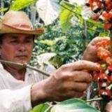 RDV Products, acteur de la responsabilité sociale et environnementale en Amazonie