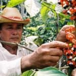 Producteur de Guarana en Amazonie