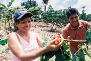 Récolte de guarana pour RDV Products