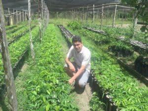 plantations d'açaï et fève tonka