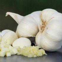 FRDP développe sa filière ail biologique en Espagne
