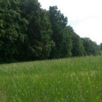 Contamination des plantes sauvages : l'alerte d'un opérateur allemand