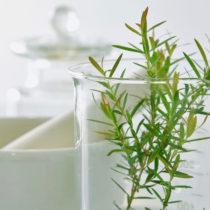 L'EGTOP publie un nouveau rapport pour les produits transformés bio
