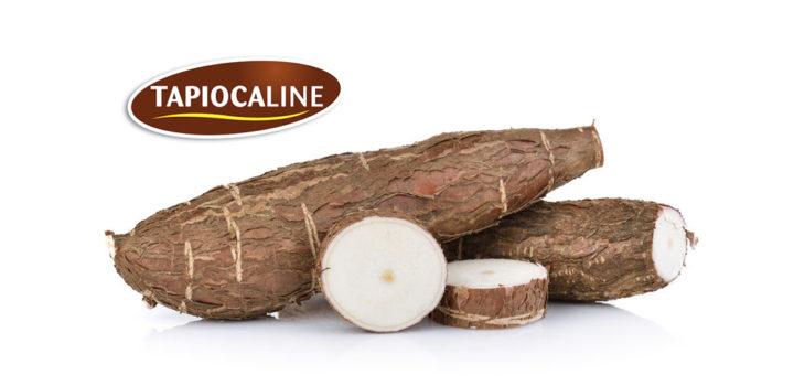Mémo : TAPIOCALINE® BIO, le texturant de manioc biologique proposé par Tipiak