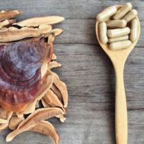 """Les champignons, nouveaux ingrédients """"santé"""" tendance ?"""