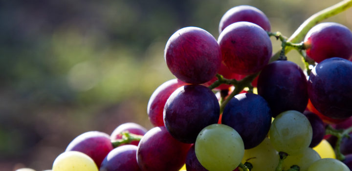 Les sucres de fruits naturels cristallisés BIO
