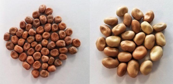 De nouvelles farines végétales riches en protéines d'origine UE
