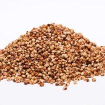 Mémo : Le Sorgho grain