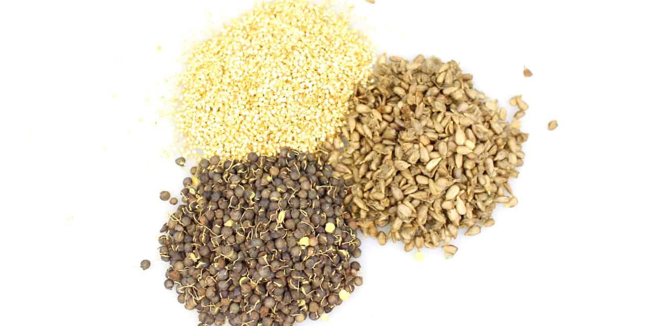 Les graines germées séchées : l'innovation remarquée de Keramis au CFIA