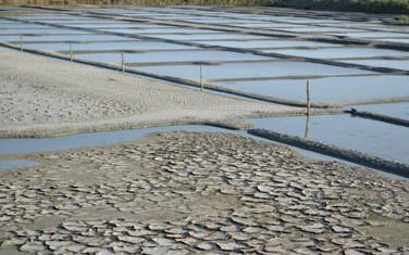 Du sel bio à l'horizon 2021 ? Les avancées de la nouvelle réglementation européenne
