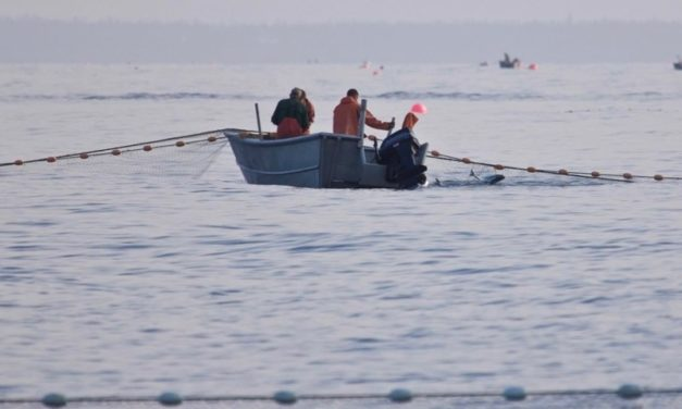 Pêche et aquaculture durable, où en est-on ?