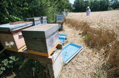 L'agriculture biologique permet d'augmenter la production de miel