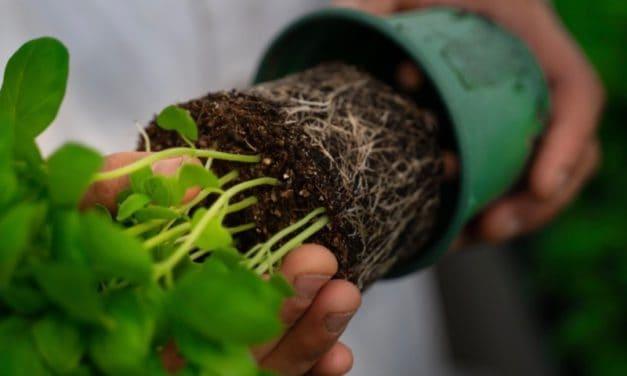 BIOPLANTS France : l'ACV au service de l'éco-conception du pot à la plante