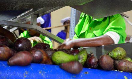 Une nouvelle usine de production d'huile d'avocat bio pour Tradin Organic