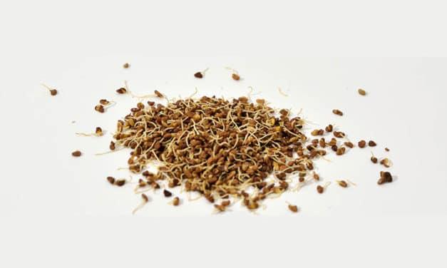 Biercors facilite l'incorporation des graines germées bio avec sa gamme déshydratée.