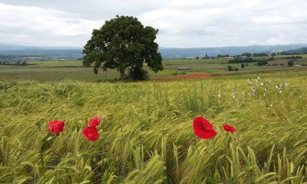 La filière céréales bio, à l'équilibre, à condition de privilégier l'origine France