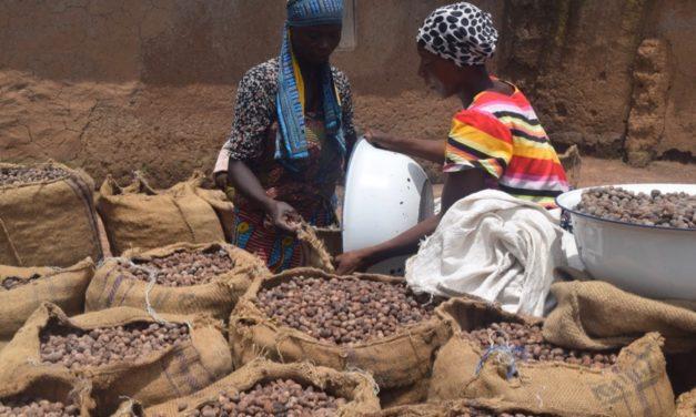 Le Karité: standardisé pour l'alimentaire, valorisé en cosmétique