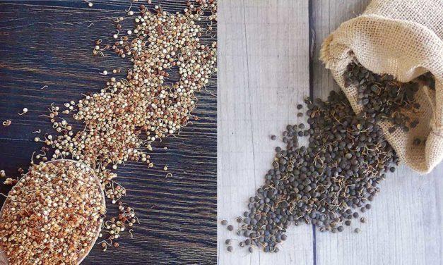 Sabarot innove avec une nouvelle gamme de Graines germées