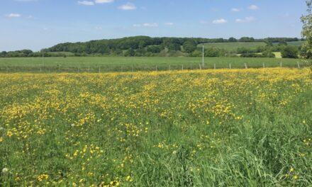 Une meilleure comparaison entre agriculture biologique et conventionnelle