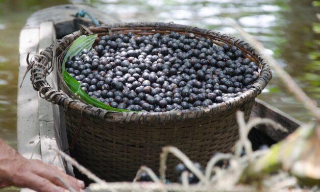 Açai : à quand la différenciation pour ce superfruit tendance ?