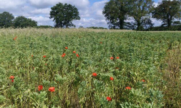 La biodiversité au cœur de la feuille de route 2020-2021 du SYNABIO
