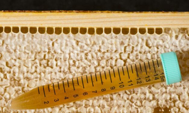 Le miel : un produit à risque à placer sous haute vigilance