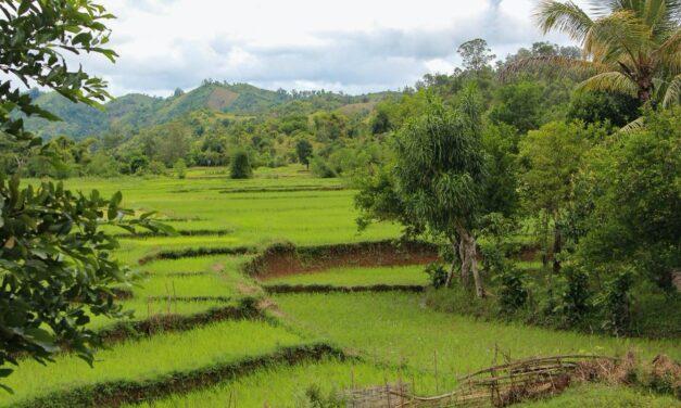 Agriculture biologique à Madagascar : la première loi est adoptée