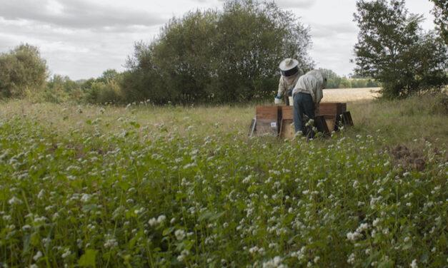 Miels : Une filière fortement internationalisée et sous tension