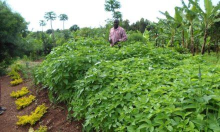 Tradin Organic lance un nouveau projet d'approvisionnement pour la chia biologique de Tanzanie