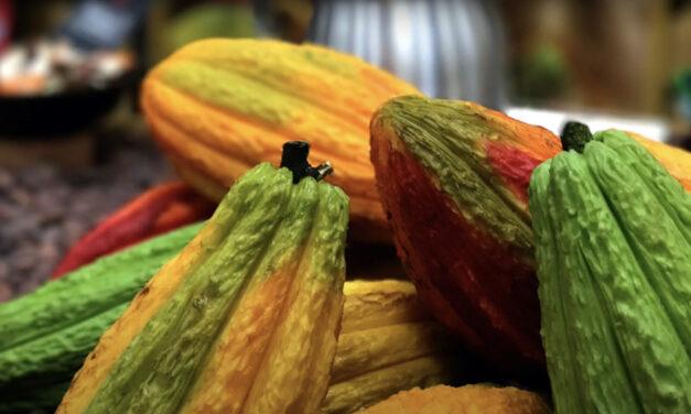 Vers un cacao durable : potentiels et défis d'une chaîne de valeur complexe