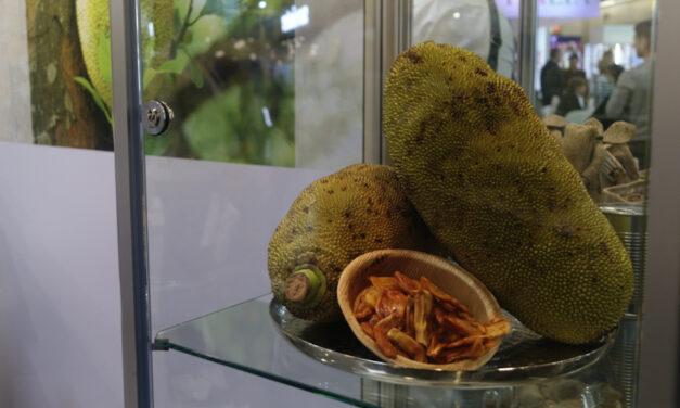 Mémo : le fruit du Jacquier