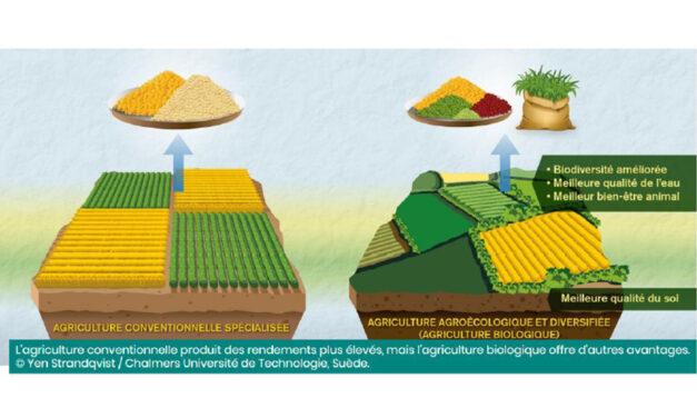 Agriculture intensive vs Agriculture bio : les incohérences du nouvel outil Agribalyse dénoncées