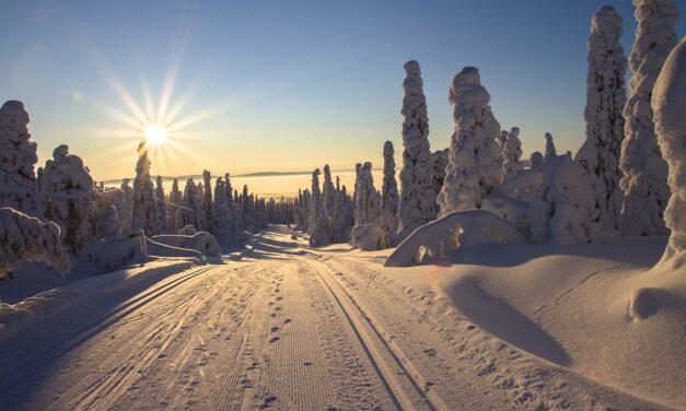 NATURAL enrichit son portefeuille d'ingrédients d'une gamme d'actifs bio de Laponie