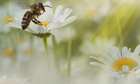 BIODIVERSITÉ : les entreprises bio doivent aller plus loin que le règlement européen